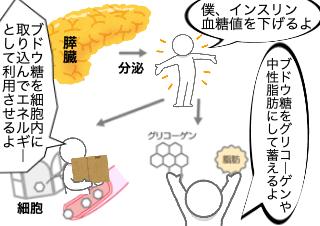 4コマ漫画「糖質で太るメカニズム」の1コマ目