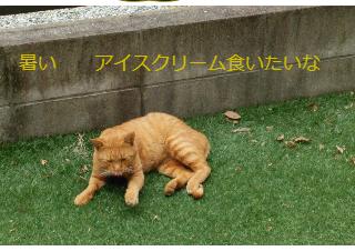 4コマ漫画「猫ちゃん達の会話」の1コマ目