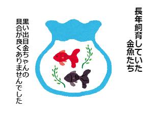 4コマ漫画「出目金ちゃん安らかに」の1コマ目