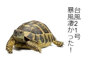 4コマ漫画「象亀の台風21号体験談」の1コマ目