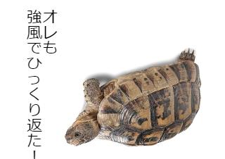 4コマ漫画「象亀の台風21号体験談」の2コマ目
