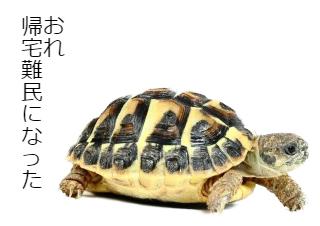 4コマ漫画「象亀の台風21号体験談」の3コマ目