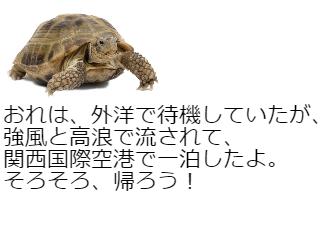 4コマ漫画「象亀の台風21号体験談」の4コマ目